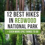 Best Hikes in Redwood National Park pinterest pin
