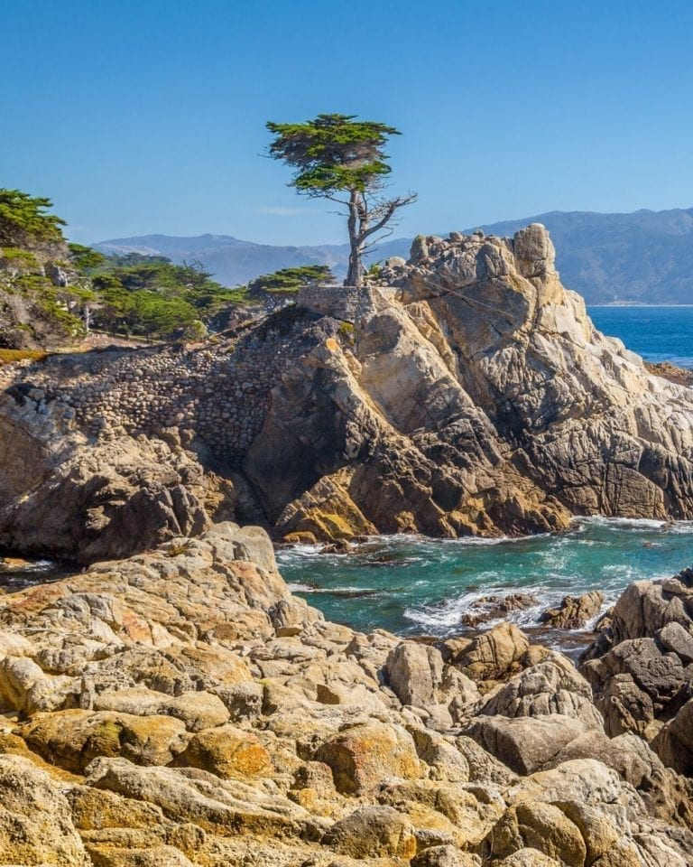 The famous Lone Cypress stands alone on a rock on the Pacific Ocean along 17 Mile Drive