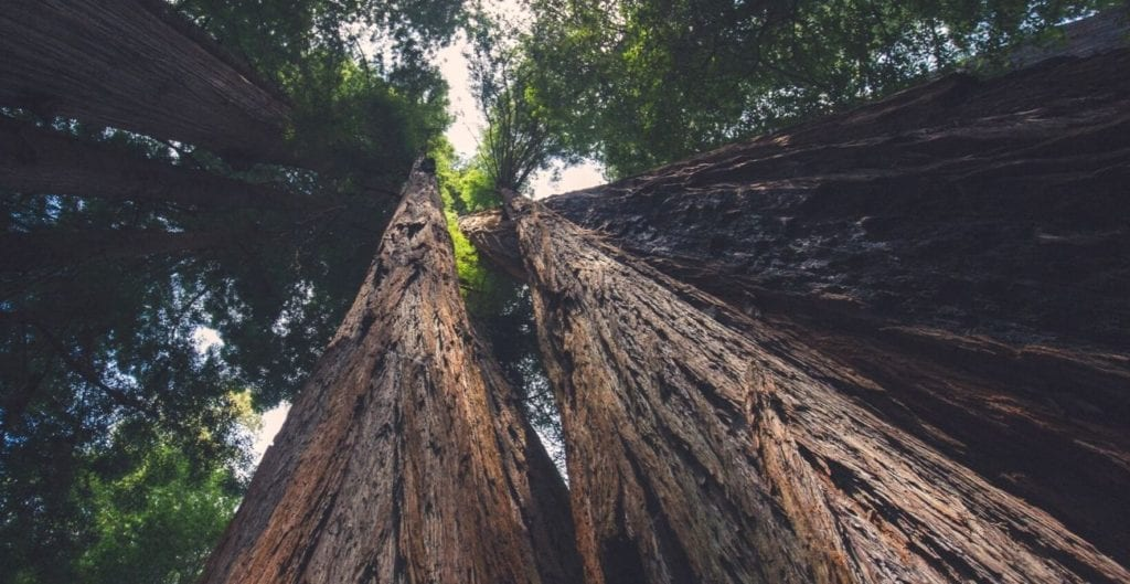 Redwood National Park in California is home to the world's tallest trees.