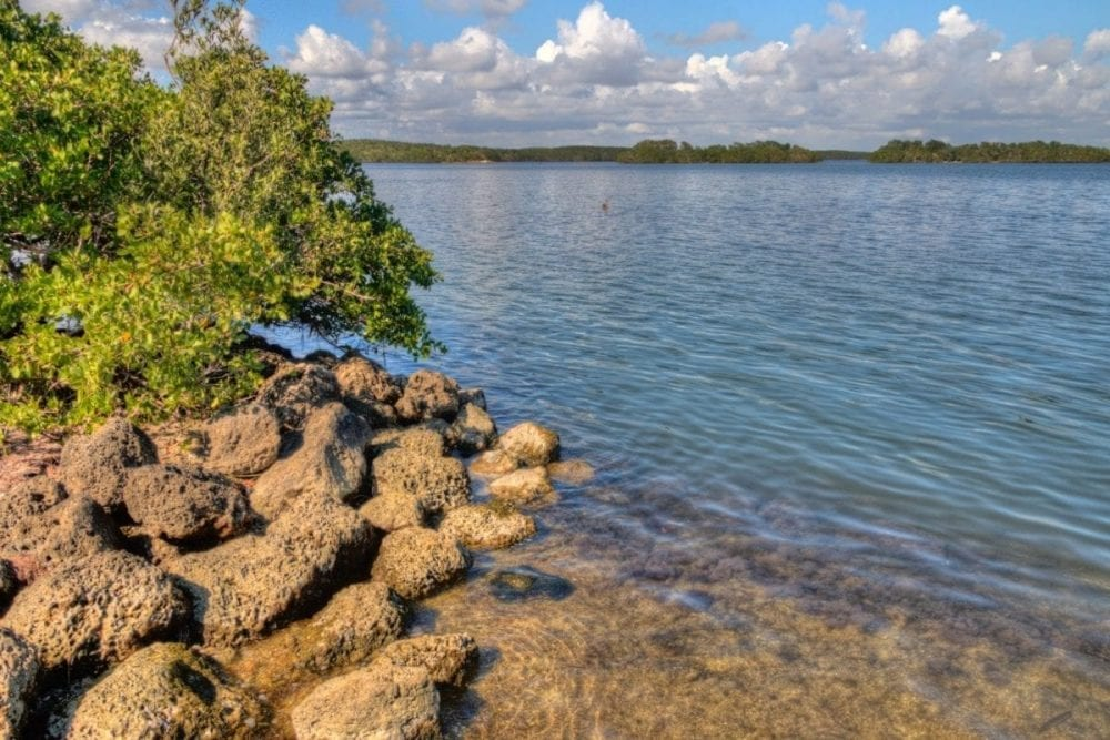 A tree sits atop rocks on the border of the ocean in Biscayne National Park in Florida