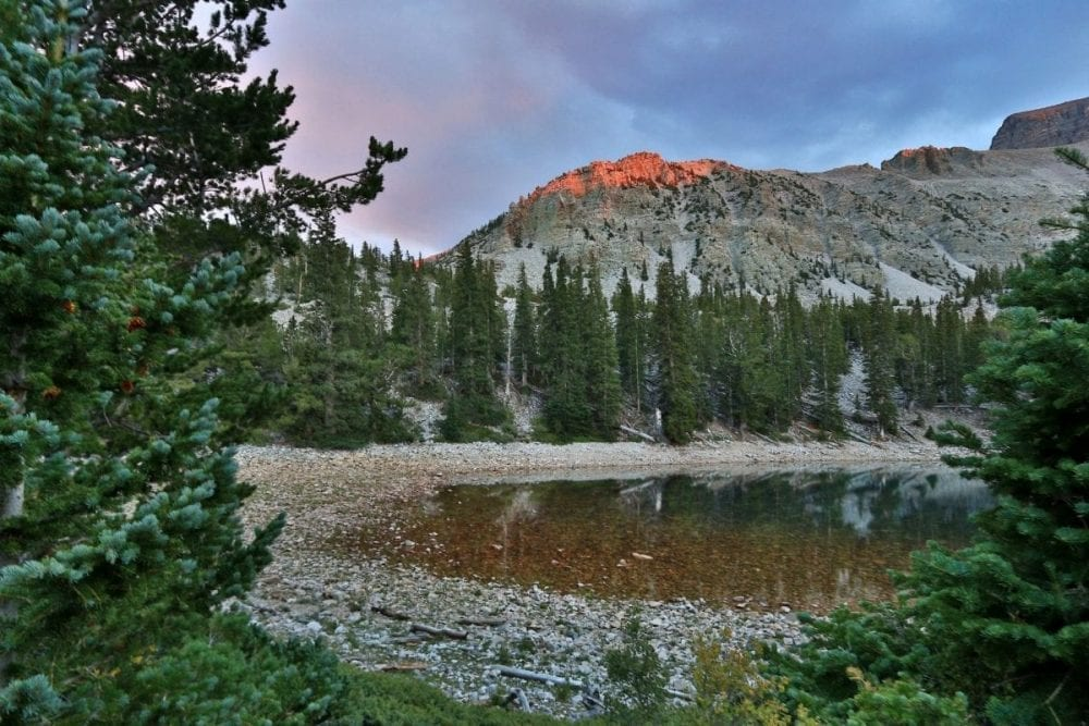 Bristlecone pine trees surround an alpine lake at sunset in Great Basin National Park in Nevada