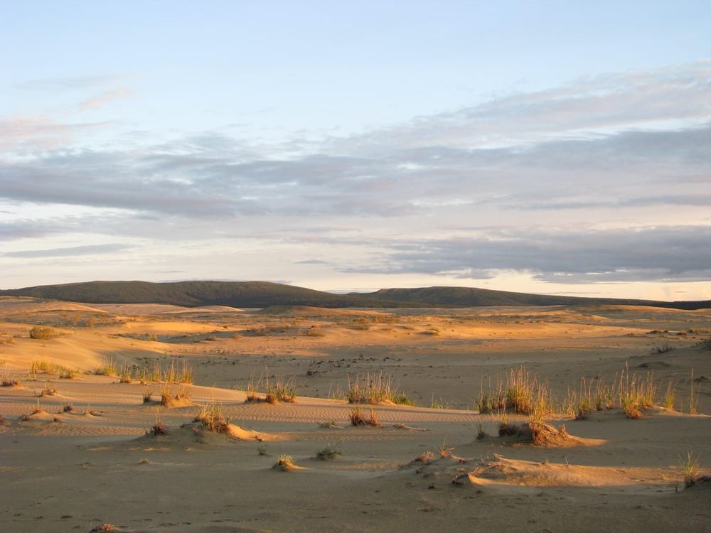 Kobuk Sand Dunes in the orange evening light in Kobuk Valley National Park in Alaska