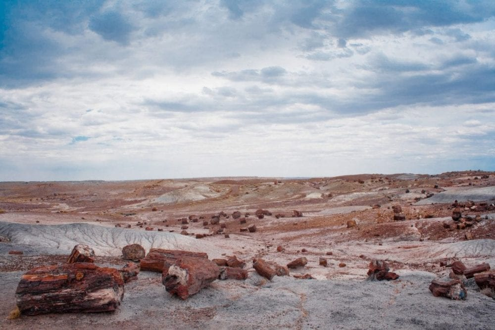 Petrified wood is scattered across a barren desert landscape in Petrified Forest National Park in Arizona
