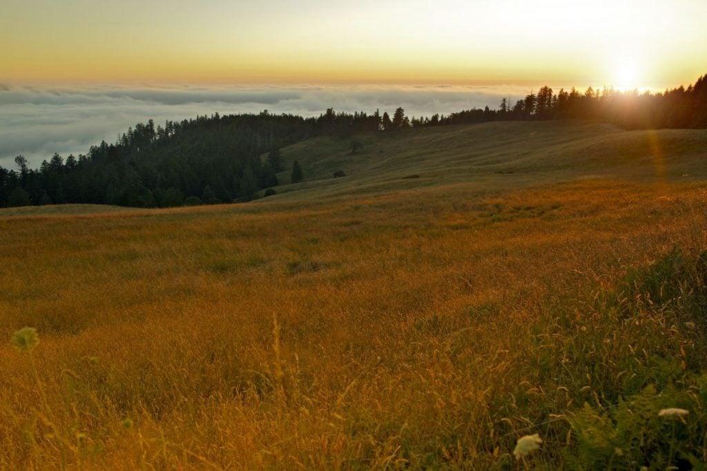Bald Hills Road in Redwood National Park