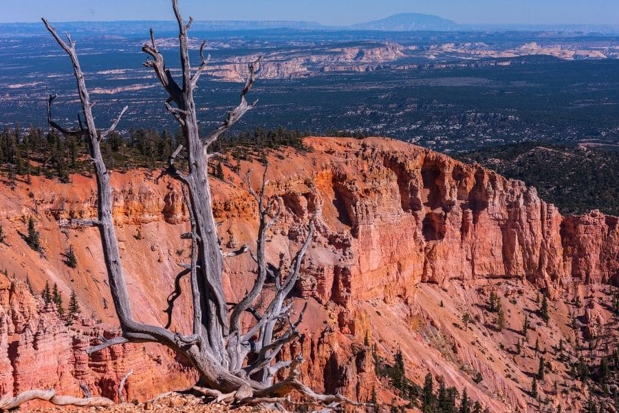 Bristlecone Loop Hike in Bryce Canyon