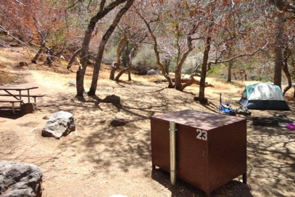 Campsite in Buckeye Flat Campground in Sequoia National Park