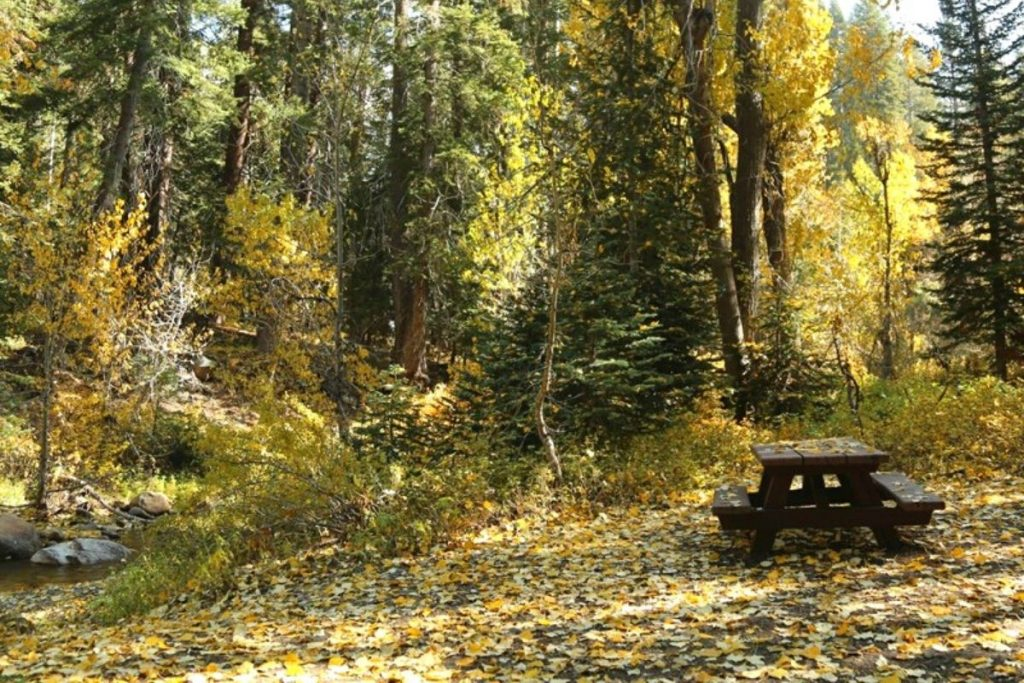 Campsite at Cold Springs Campground in Sequoia National Park