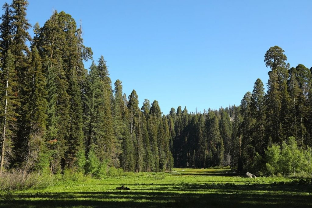 Sequoia tree-lined Crescent Meadow in Sequoia National Park