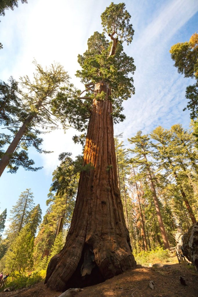 General Grant Tree, one of the best hikes in Kings Canyon National Park