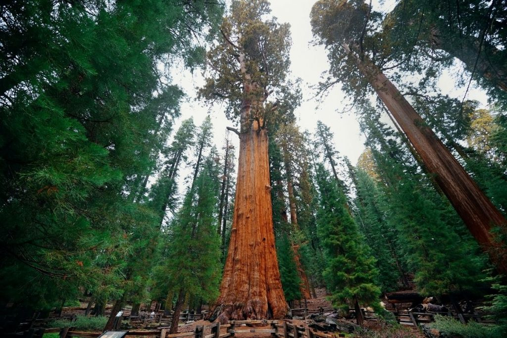 General Sherman Tree Trail in Sequoia National Park