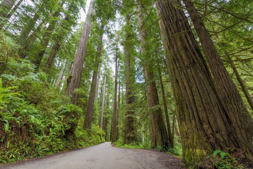 Howland Hill Road in Redwood National Park