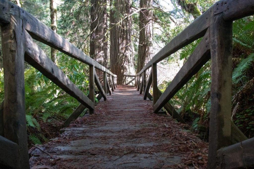 James Irvine Trail in Redwood National Park