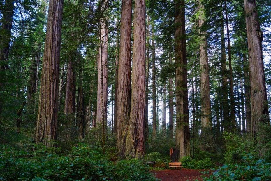 Lady Bird Johnson GroveKlamath River Overlook in Redwood National Park