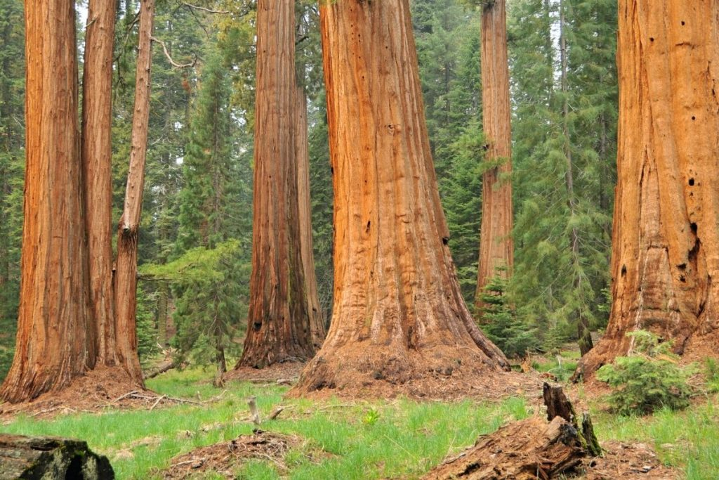 North Grove Loop Trail in Kings Canyon National Park