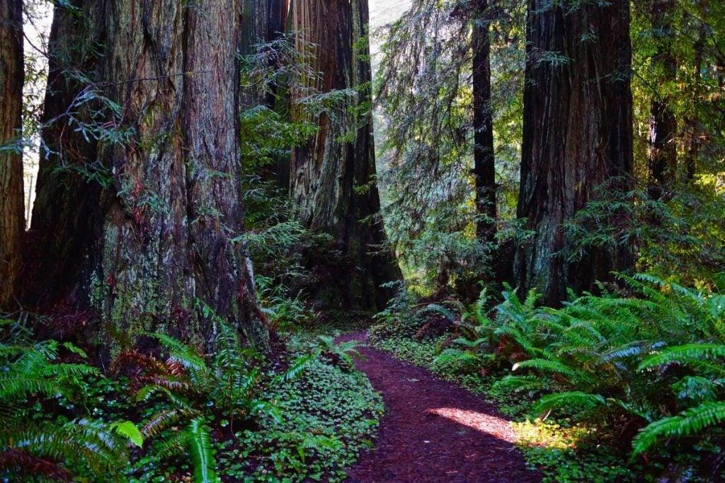Prairie Creek Redwoods State Park trail