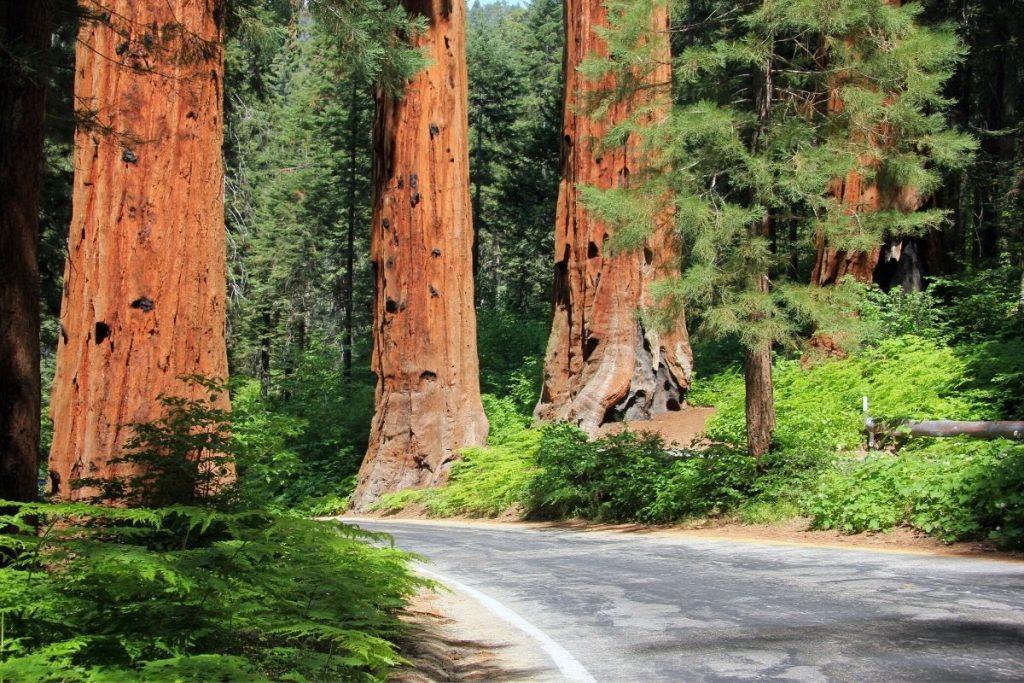 Generals Highway in Sequoia National Park in Summer