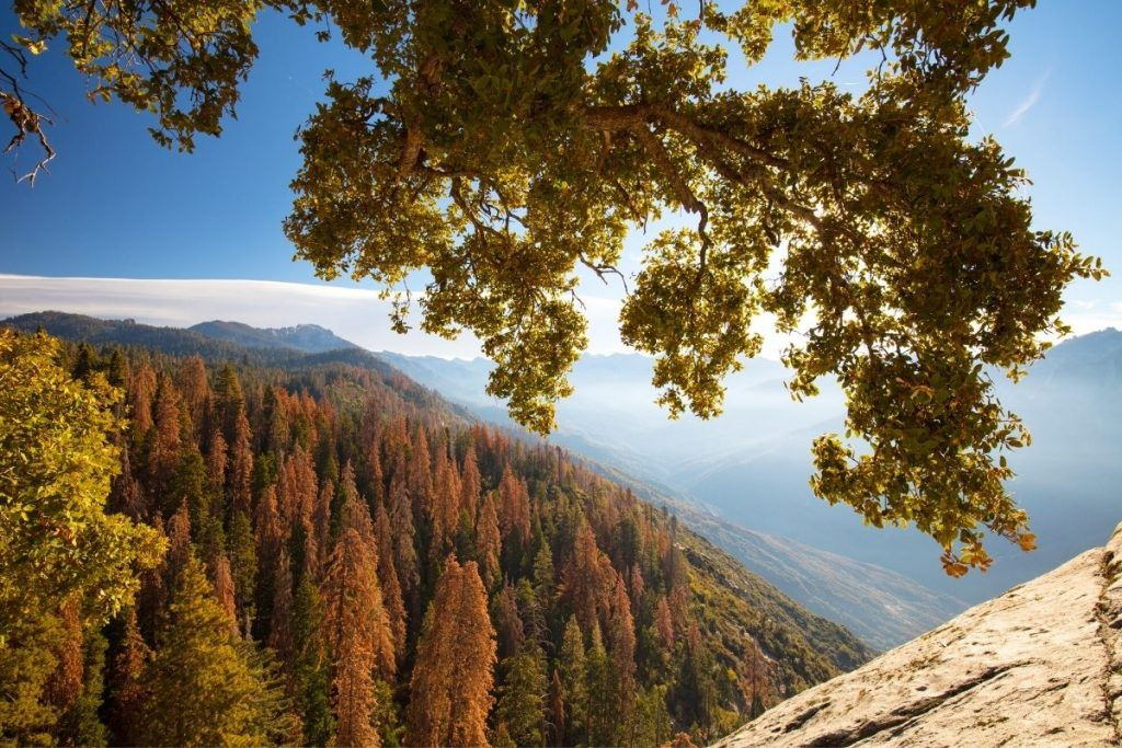 Fall colors from an overlook in Sequoia National Park