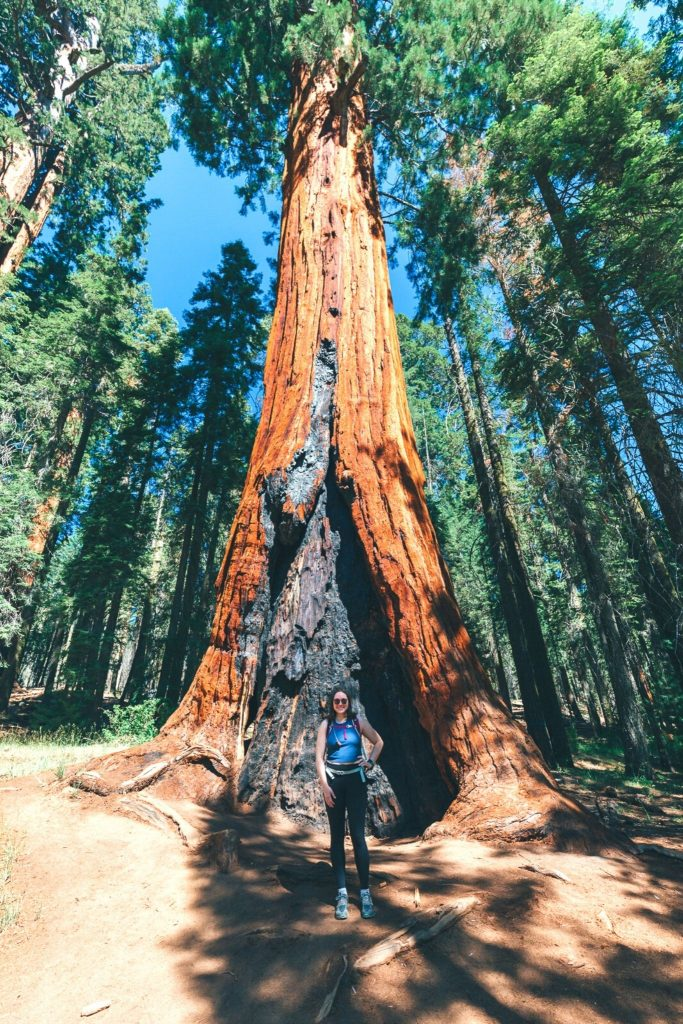 Standing in front of a sequoia tree in Sequoia National Park
