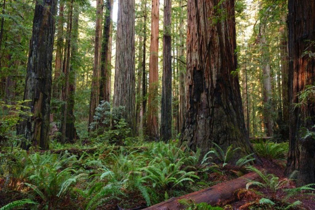 Stout GroveKlamath River Overlook in Redwood National Park