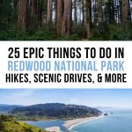 Best Things to Do at Redwood National Park Pinterest Pin