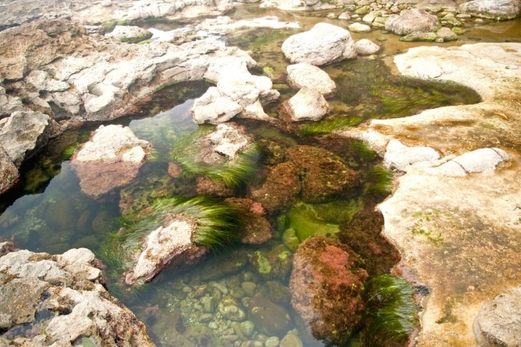 Tidepools at low tideKlamath River Overlook in Redwood National Park