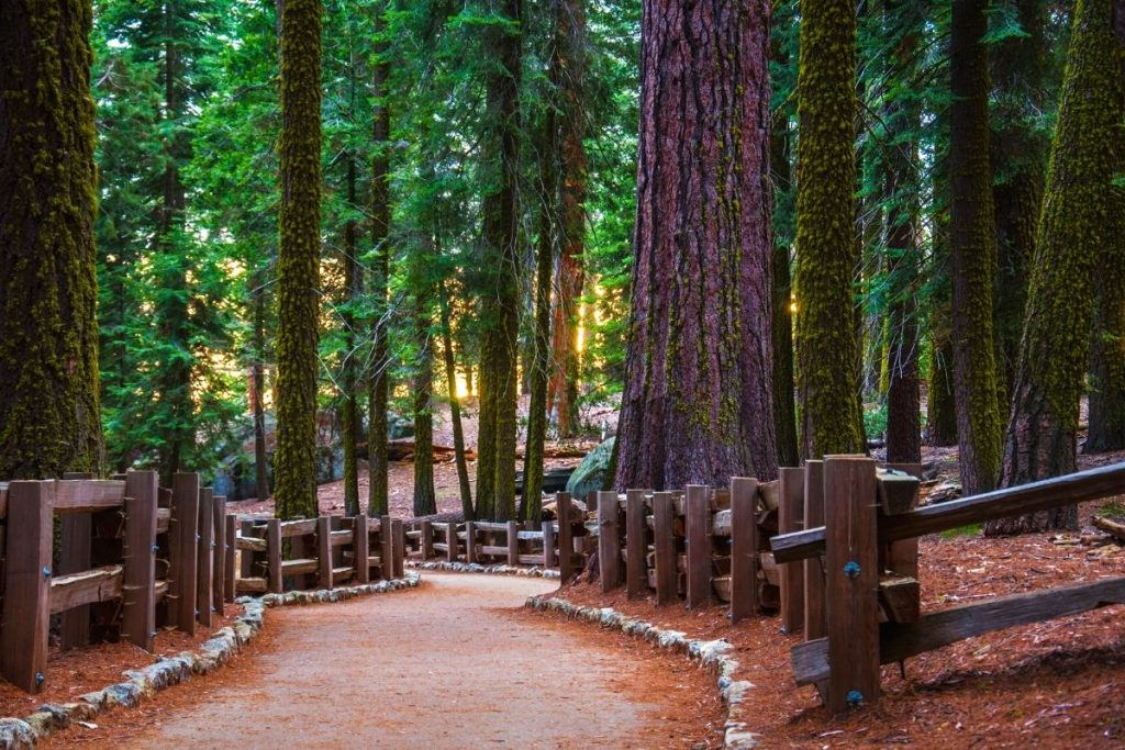 Trail of the Sequoias paved rock-lined trail in Sequoia National Park
