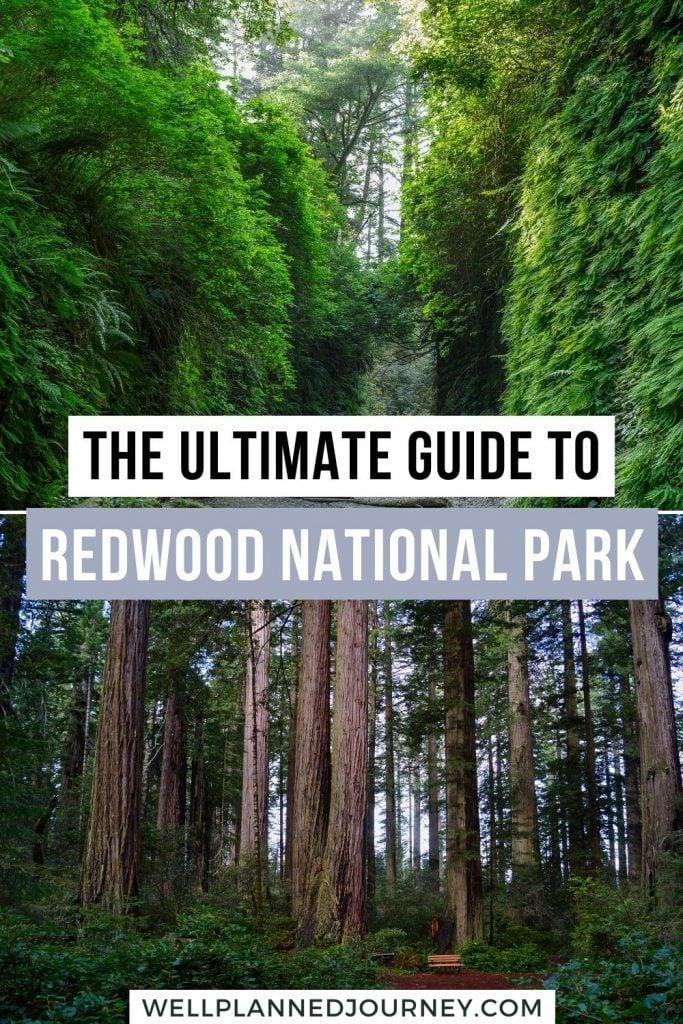 Visiting Redwood National Park Pinterest Pin